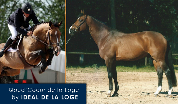 Qoud'Coeur de la Loge by Ideal de la Loge